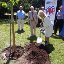 Councillor Dianne Rhys planting a new tree